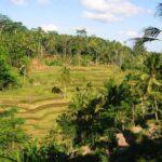 Dovolená na Bali – exotická dovolená v Indonésii
