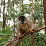 Dovolená Madagaskar